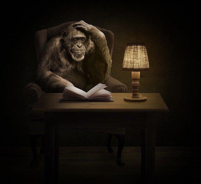Šimpanz sedí za pracovným stolom, na ktorom je kniha a lampa.jpg